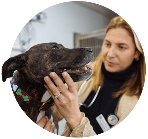 London Vet Specialists Veterinary Surgeon